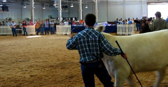 World Beef Expo accepting entries