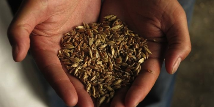 Heritage grain project feeds growing demand