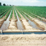 Surface agricultural irrigation in Colorado. (Aaron Volkening via Flickr)