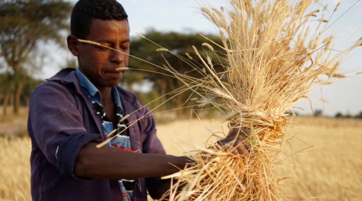New global crop alliance proposed
