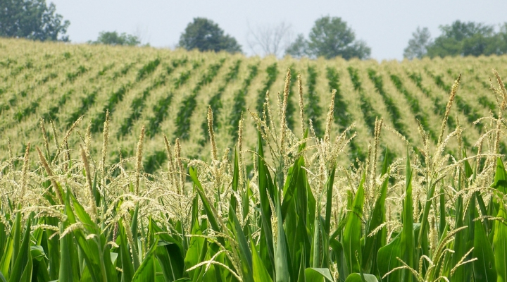 First corn verdict in; NY meetings continue