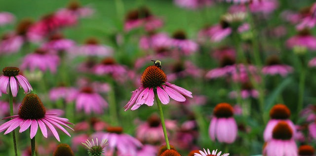 Tips for protecting pollinators