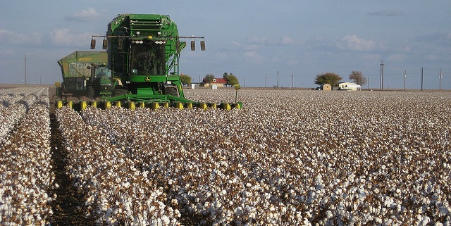 Struggling cotton farmers seek help
