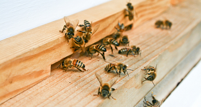 Beekeepers fear sting of regulations