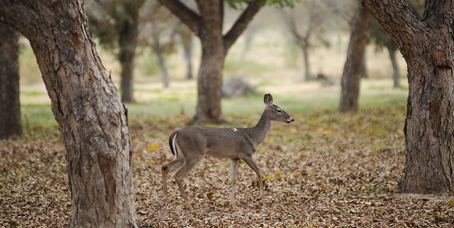 Master Naturalist program seeks applicants