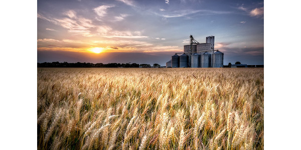 Kansas Wheat seeks innovative research proposals