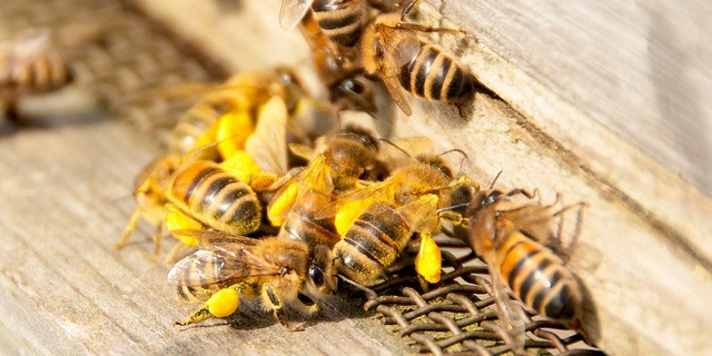 Apiculture insurance expanded to more states
