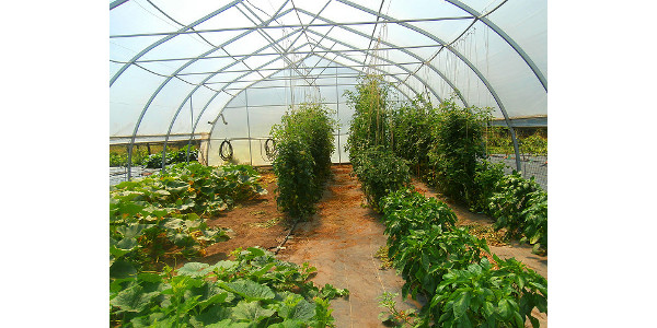 Greenhouse and produce marketing tour