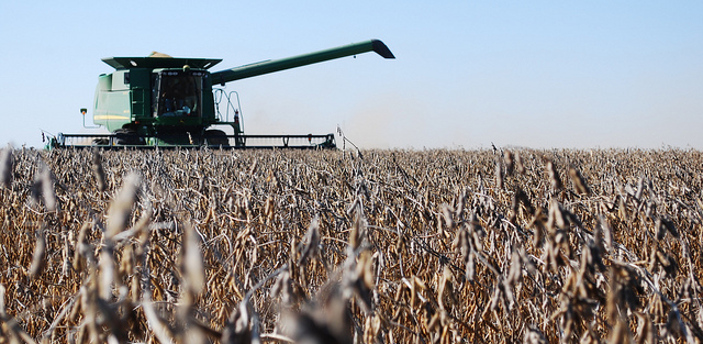 USDA reports record high soybean acreage