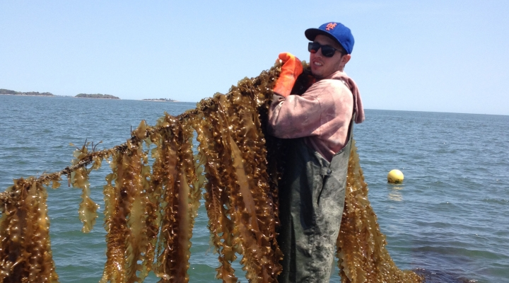 Connecticut's new marine crop