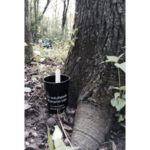 A mosquito trap in Dane County in 2016. This style of trap, which collects eggs laid by mosquitos in a cup of water, was used to identify the Asian tiger mosquito in the county this year. (Photo: Susan Paskewitz)