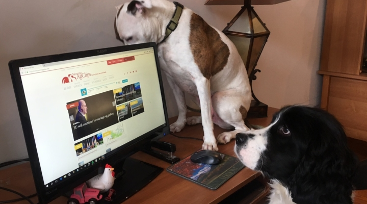 Creating pawsitive new experiences