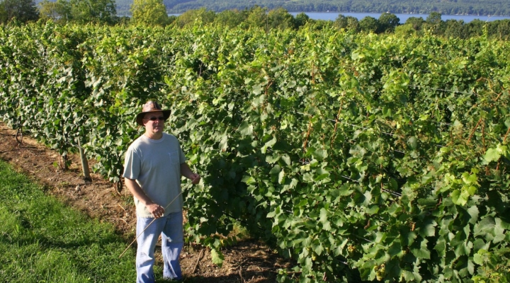 Viticulture specialist to serve eastern NY