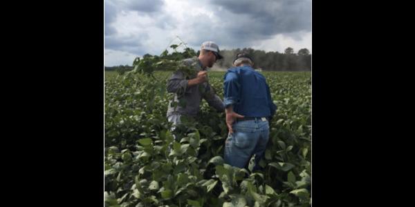 Row crop scouting workshops