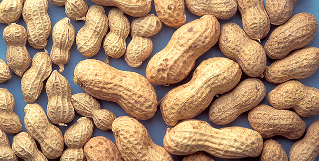 New system improves peanut drying