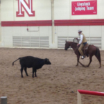 Stockmanship expert Curt Pate ropes a yearling for doctoring at a clinic on June 30 in Lincoln. Pate will be on-hand for demonstrations during a Beef Quality Assurance stockmanship clinic on Aug. 22 in North Platte. (Courtesy of University of Nebraska-Lincoln)