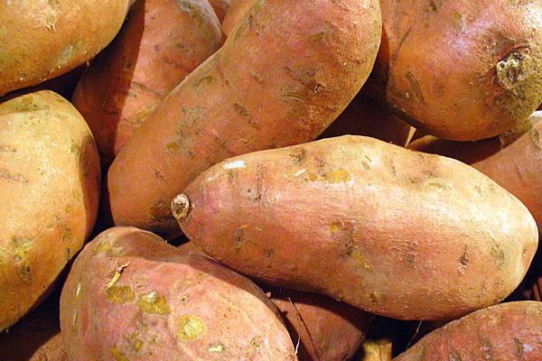 Distillery making vodka from Jersey sweet potatoes
