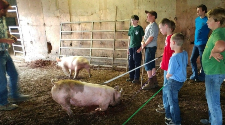 4-H Animal Clinics held in Columbia Co.