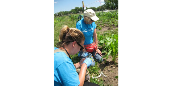 Fruit and vegetable pest and disease monitoring