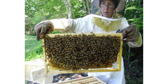 Piscataquis Co. beekeeping workshop