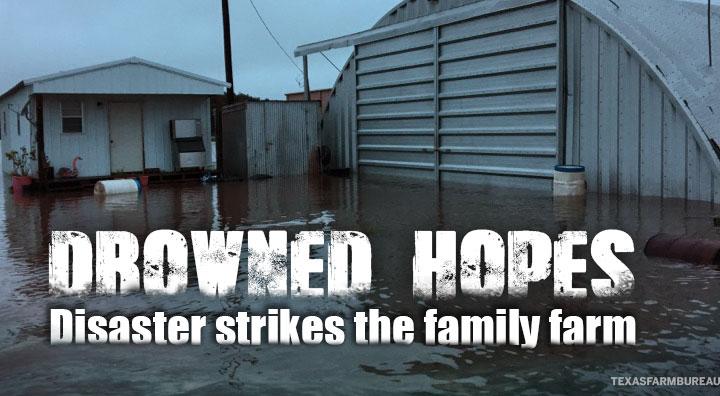 Disaster strikes family farm
