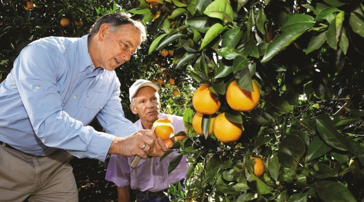 Solutions sought for citrus greening