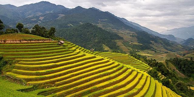 Multi-nutrient rice against malnutrition