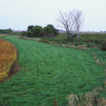To participate in the buffer strip incentive program signed into law during the 2017 South Dakota Legislative Session, landowners need to submit applications by October 15, 2017. (Photo courtesy of iGrow.org)
