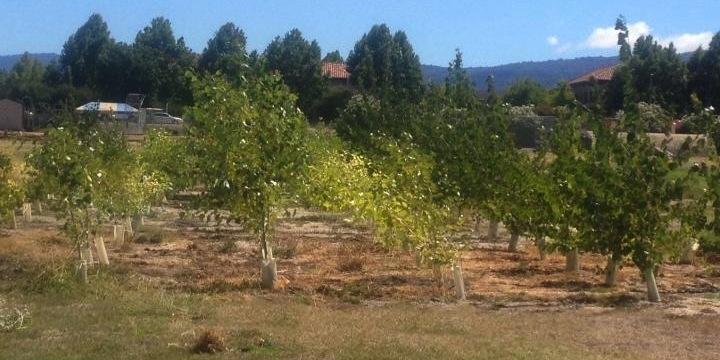 Probiotics help trees clean up toxins