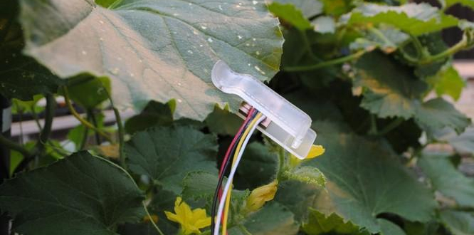 Leaf sensors tell when crops need water