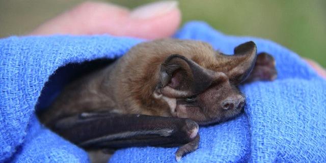 Bat-tastic Night Out