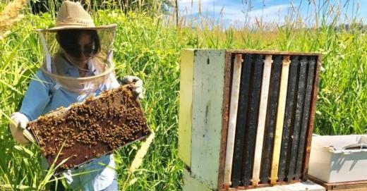 'Bee talk' may help improve honey bee health
