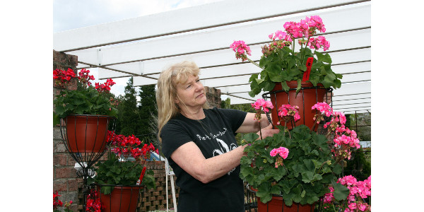 Gail Foushee sets out flowers in preparation for another busy day at Big Bloomers Flower Farm. (Courtesy of NC Cooperative Extension)
