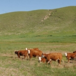 The 23rd annual fall seminar series offered by the University of Nebraska-Lincoln's Center for Grassland Studies will include 12 lectures on topics related to grasslands. (Courtesy of University of Nebraska-Lincoln)