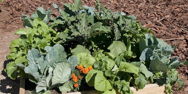 Horticulturist offers fall garden tips