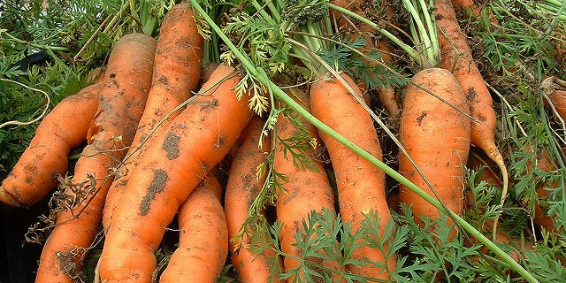 Woman finds lost ring on a carrot in garden