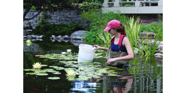 Working in water: As an intern at Allen Centennial Garden, Saige Henkel created an online database to help people identify plants. But she also got her feet wet (and much more) taking care of the water lilies. (Courtesy of UW-Madison)