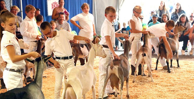 1st ever Agriculture Career Day at NYS Fair