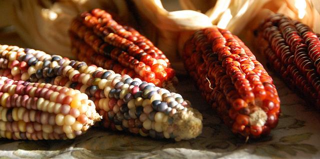 Project works to grow Pawnee corn