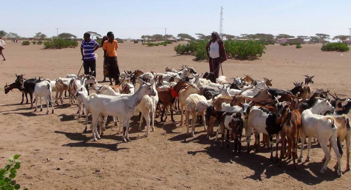 Drought-stricken herders need support