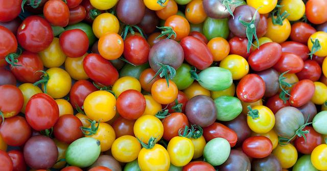 Winners of the Massachusetts Tomato Contest