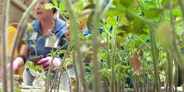Become A Master Gardener Morning Ag Clips