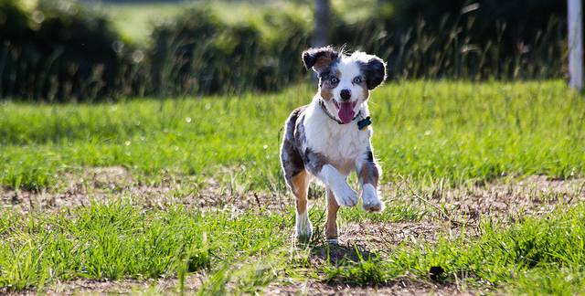 Why farmers have you leave your dogs home