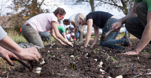 Garlic Growing workshop
