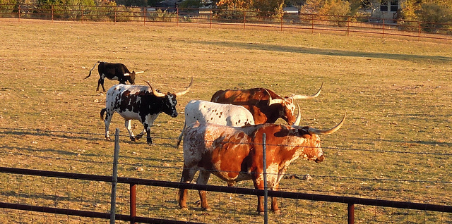 Local ranching event, August 15