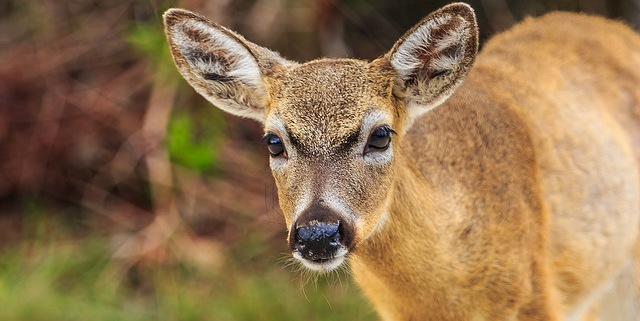 Help monitor for CWD