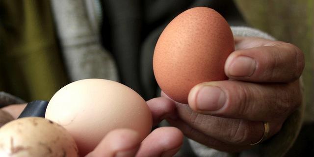 Belgian town makes giant omelet