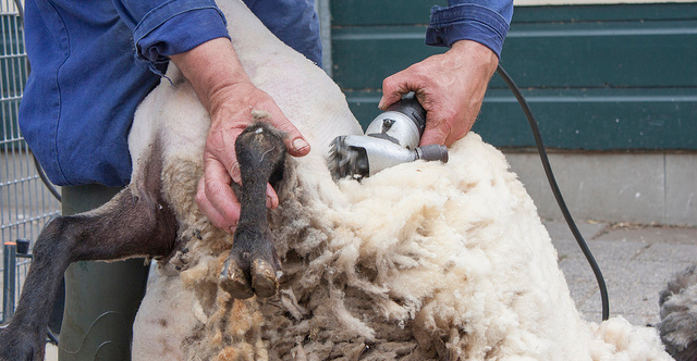 AmericanWool.org launches to educate consumers