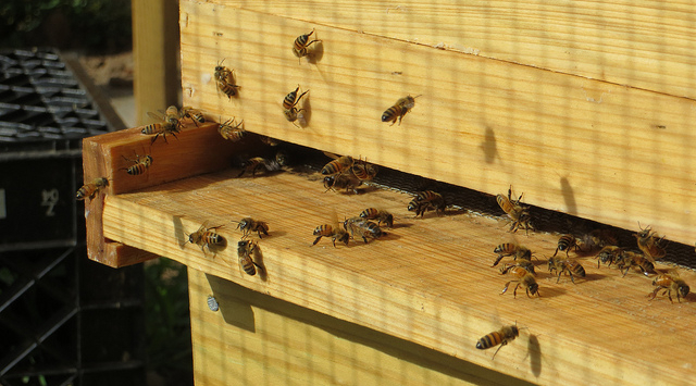 Fall Beginner Bee School