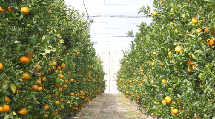 System screens out citrus greening insect